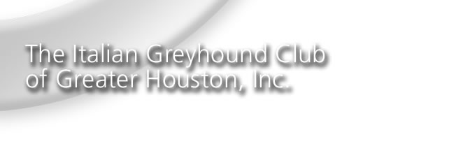 Italian Greyhound Club of Greater Houston